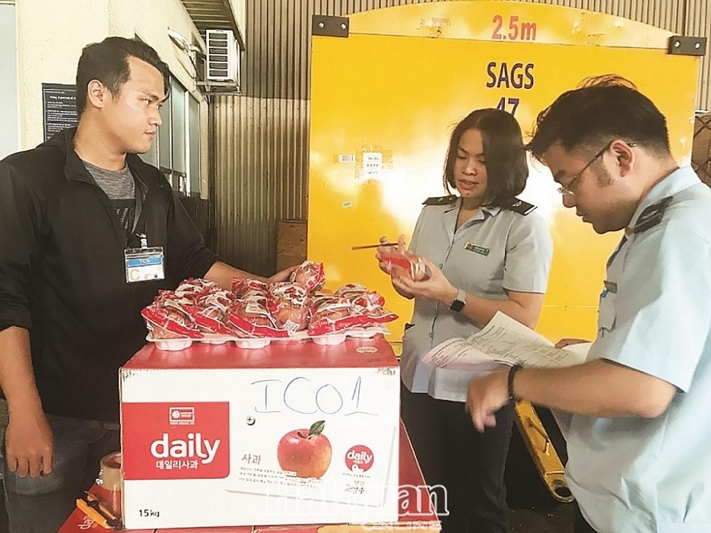 Công chức Hải quan sân bay Tân Sơn Nhất kiểm tra trái cây NK. Ảnh: T.H.