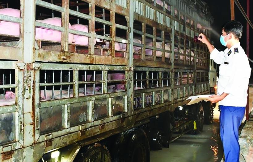 Cân đối cung - cầu sẽ dừng nhập khẩu lợn sống từ Thái Lan