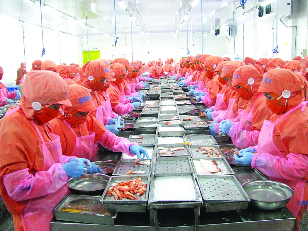Năm 2021 đang có nhiều điều kiện thuận lợi cho sản xuất, XK mặt hàng tôm. Ảnh: N.Thanh