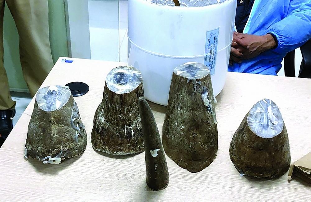 Tang vật 5 mẫu vật sừng tê giác (ngày 12/12/2020).  Ảnh: Chi cục Hải quan cửa khẩu cảng Cẩm Phả cung cấp.