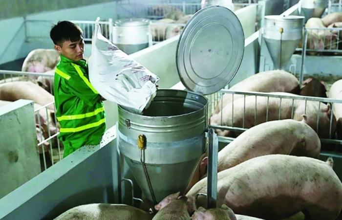 Bộ Công Thương lập Đoàn kiểm tra liên ngành mặt hàng thịt lợn