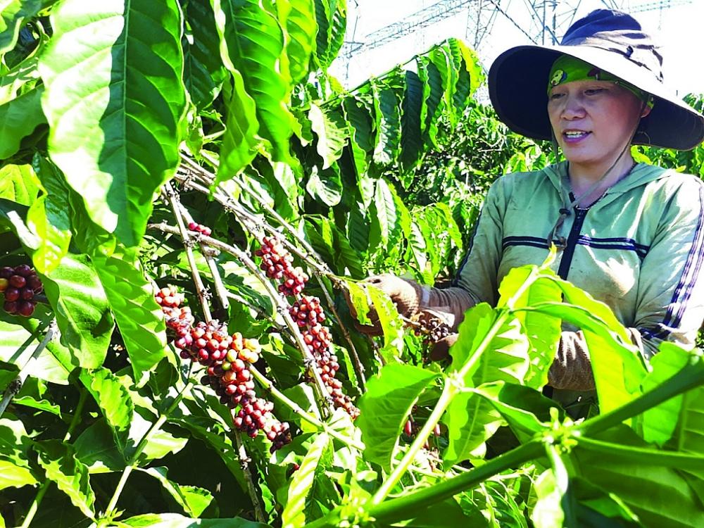 Có đến 80% nông sản Việt XK dưới cái tên của DN nước ngoài.  Ảnh: Nguyễn ThanH