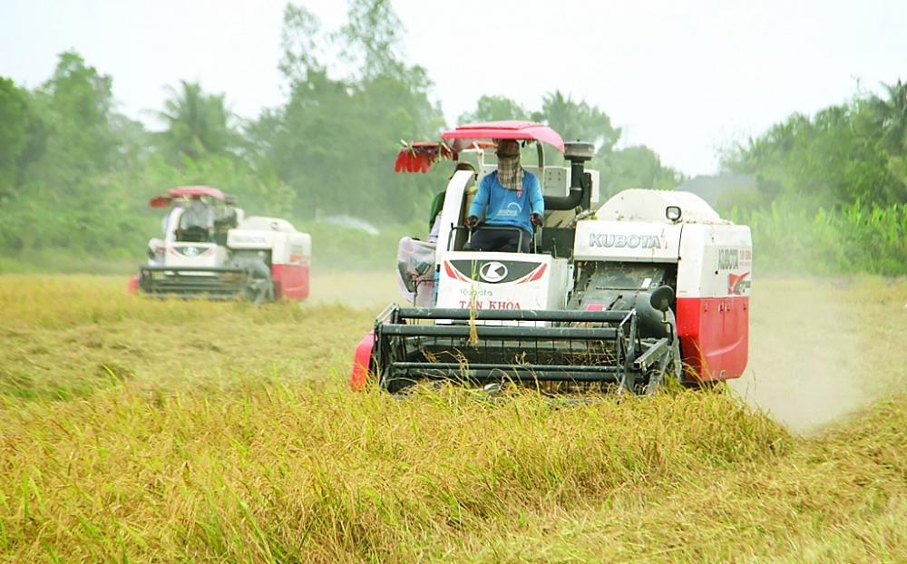 Trong suốt thời gian dài, có đến 80% nông sản Việt XK dưới cái tên của DN nước ngoài. Ảnh: Nguyễn Thanh