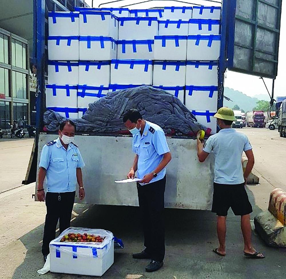 Công chức Chi cục Hải quan cửa khẩu quốc tế Lào Cai kiểm tra mặt hàng vải thiều xuất khẩu.