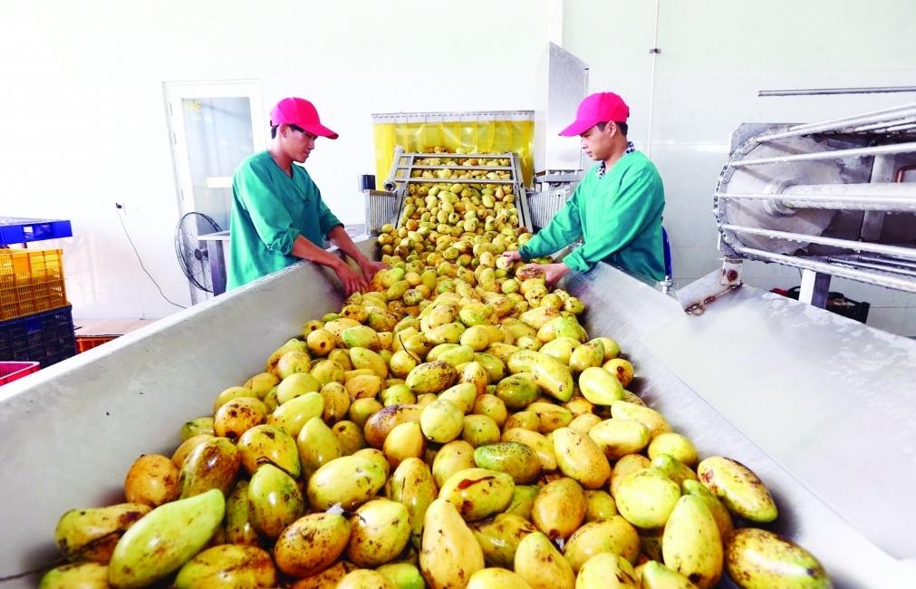 """Vừa đạt hơn 41 tỷ USD, xuất khẩu nông sản """"nhắm"""" tới 50 tỷ USD"""