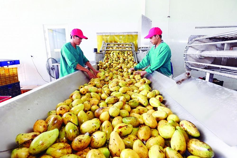 Chất lượng sản phẩm là yếu tố mấu chốt giúp hàng Việt, đặc biệt là hàng nông sản gia tăng sức cạnh tranh trong XK.  Ảnh: ST