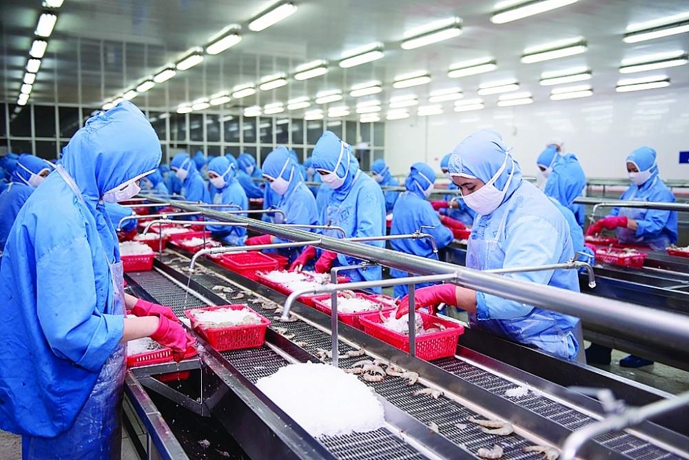 Hoạt động sản xuất tôm xuất khẩu tại Công ty Sao Ta