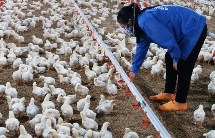 Chủ động các phương án sản xuất để cuối năm không bị thiếu lương thực