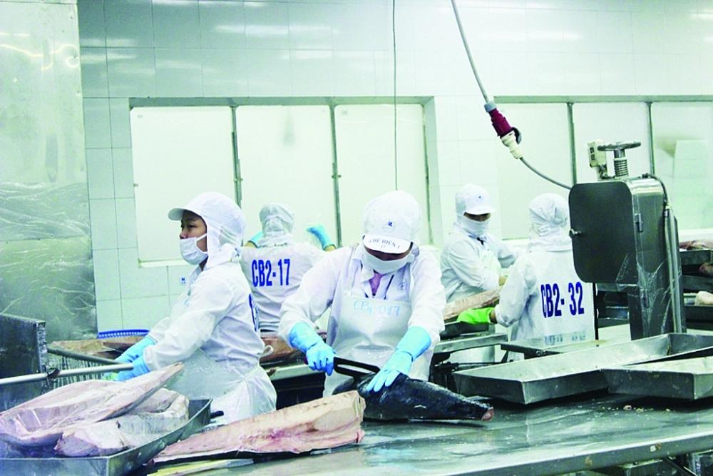 Xuất khẩu cá ngừ kỳ vọng tăng mạnh những tháng cuối năm