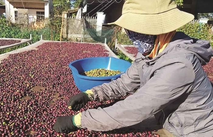 Quý II - xuất khẩu cà phê sẽ khó khăn