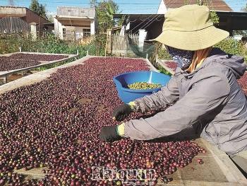 Cà phê Việt đầy tiềm năng tại thị trường Bắc Phi