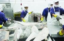 Nhờ CPTPP, xuất khẩu cá ngừ sang Mexico khởi sắc