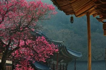 Du lịch Hàn Quốc đẩy mạnh quảng bá nửa cuối năm 2020