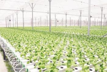 Sôi động khởi nghiệp trong nông nghiệp: Xây dựng nền nông nghiệp sạch, tạo nguồn hàng xuất khẩu uy tín