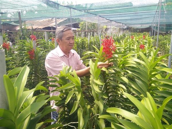 tphcm lan dau tien to chuc festival hoa lan