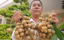 nhieu san pham nong nghiep cua my dang muon duoc ban tai thi truong viet nam