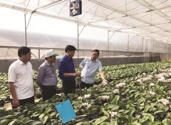 """Sản xuất xuất khẩu hoa: Mãi chưa """"lớn"""""""