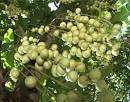 Tròn méo trái bòn bon
