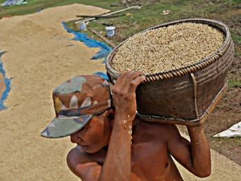 Gần nửa lượng gạo xuất khẩu của Campuchia là buôn lậu