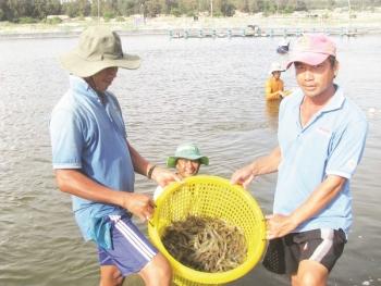 Xuất khẩu thủy sản: Khó khăn vẫn tăng trưởng tốt