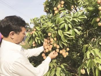 Tìm lối bứt phá xuất khẩu rau quả sang Nhật Bản