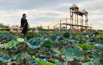 Nông dân Vinh Ba trồng sen làm du lịch