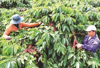 Liên kết để Việt Nam trở thành trung tâm sản xuất cà phê của thế giới