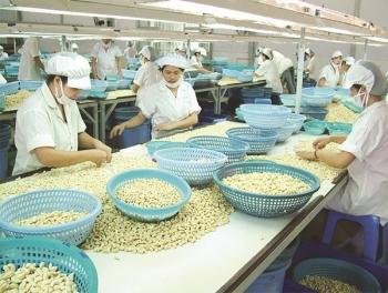 Xuất khẩu hạt điều tiếp tục đương đầu nhiều thách thức