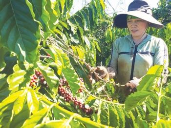 Năm buồn với xuất khẩu cà phê
