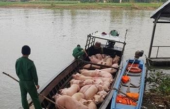 Hải quan triển khai nhiều biện pháp chống buôn lậu lợn