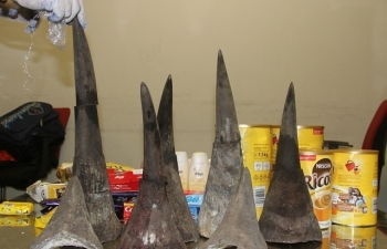 Cận cảnh vụ bắt giữ gần 15 kg sừng tê giác tại sân bay Nội Bài