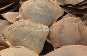Photos: Hàng trăm bao tải chứa vảy tê tê châu Phi chất đống tại cảng Hải Phòng