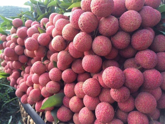Nông sản xuất khẩu tại Hải quan Lào Cai tăng mạnh gần 60%