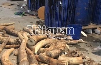 Hình ảnh cất giấu hơn 7 tấn ngà voi, vảy tê tê tại Hải Phòng