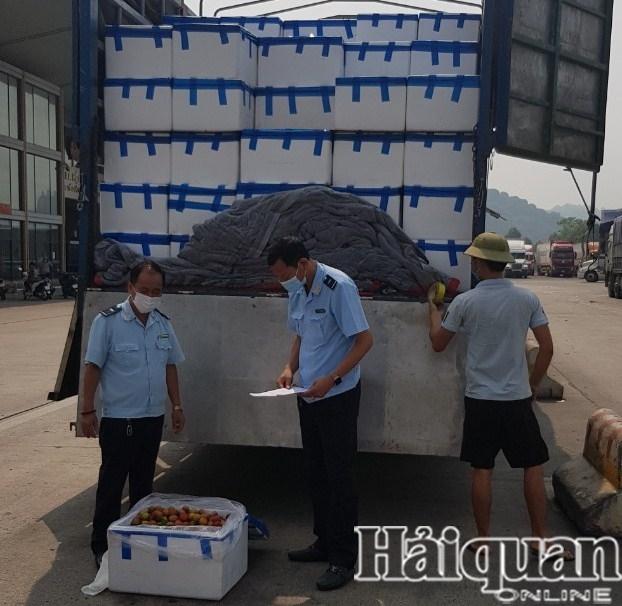 Hải quan Lào Cai thông quan hơn 38.000 tấn vải thiều xuất khẩu