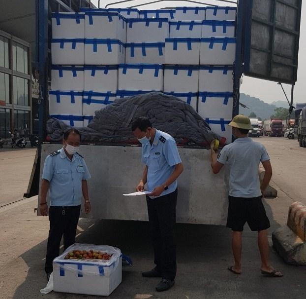 Lào Cai: Thông quan hơn 17.000 tấn quả đặc sản của Bắc Giang, Hải Dương