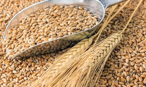 Infographics: Nhập khẩu lúa mì từ Australia tăng hơn 170%