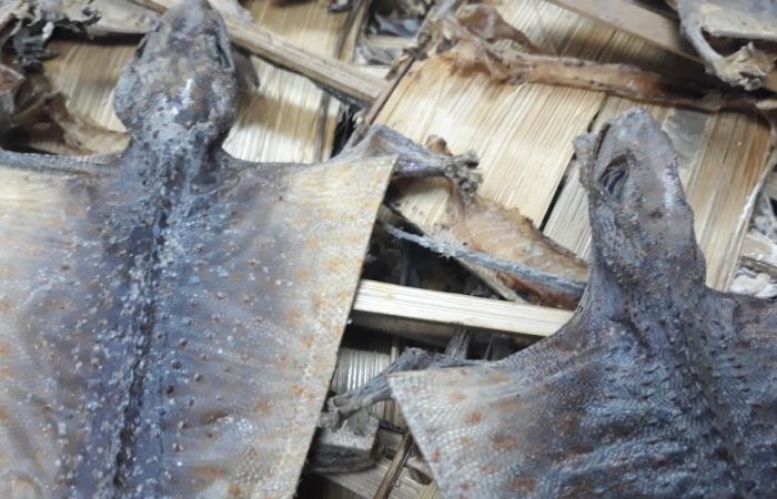 Nửa tấn tắc kè khô nhập khẩu trái phép từ Indonesia về sân bay Nội Bài