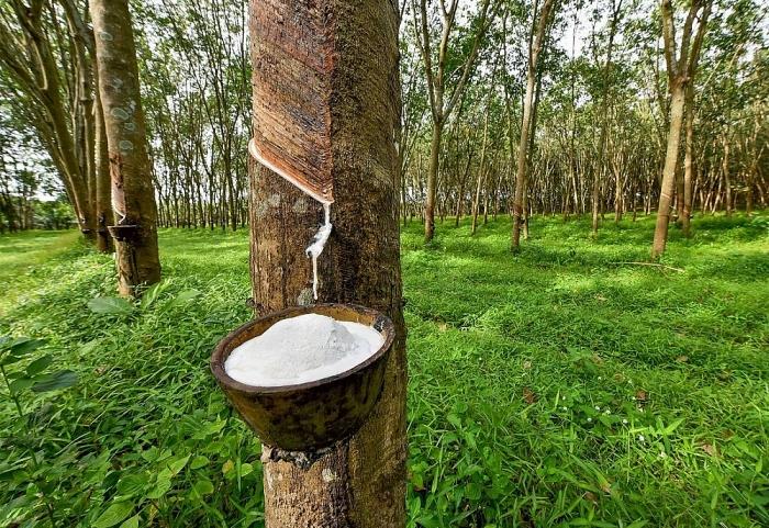 Nhập khẩu cao su từ Campuchia tăng 500%