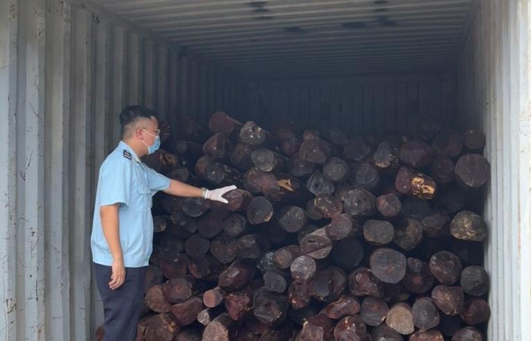 Hải quan Hải Phòng khởi tố vụ buôn lậu gỗ giáng hương