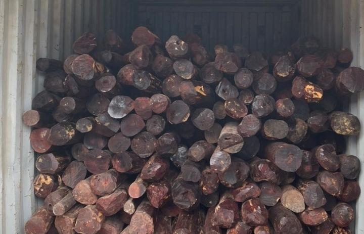 Hình ảnh container gỗ giáng hương trong vụ việc Hải quan Hải Phòng vừa khởi tố