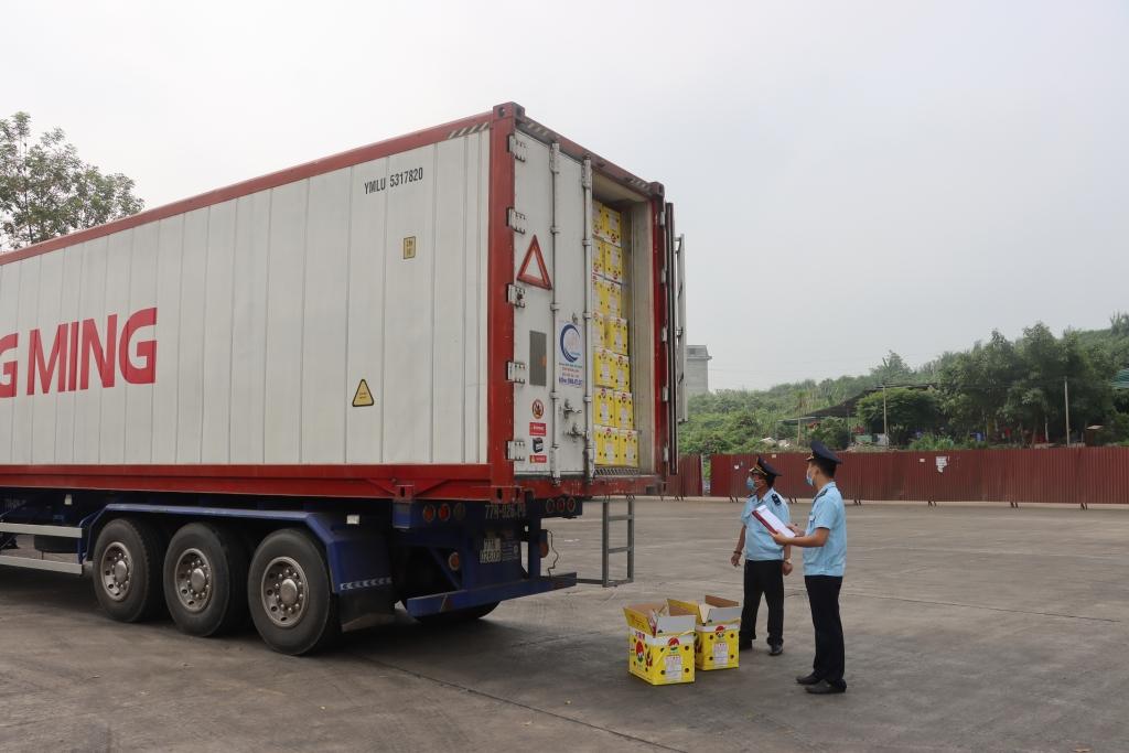 Hải quan Lào Cai thông quan gần 400 nghìn tấn thanh long xuất khẩu