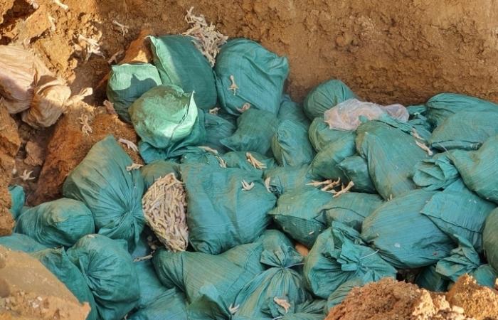 Hải quan Lào Cai tiêu hủy gần 3 tấn chân gà đông lạnh