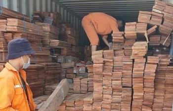 Hải quan Hải Phòng: Bắt 3 container gỗ quý nhập khẩu trái phép