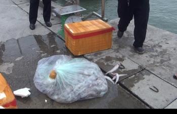 Tiêu hủy gần 4 tấn cá khoai nhập lậu từ Trung Quốc