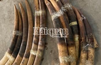Hải quan Hải Phòng bắt giữ 2 tấn ngà voi, vảy tê tê nguồn gốc châu Phi