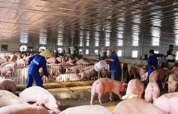 Giá lợn giảm sâu, người chăn nuôi sạt nghiệp, trắng tay