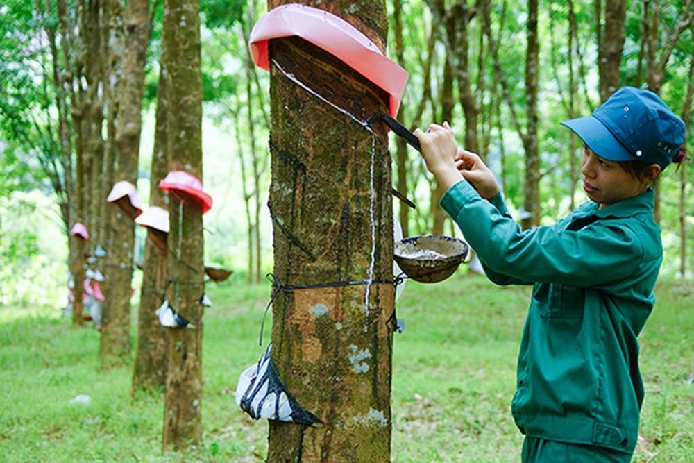 1200-tap-doan-cong-nghiep-cao-su-viet-nam-nhan-dien-rui-ro-tai-chinh-khi-gia-cao-su-bap-benh1586478595