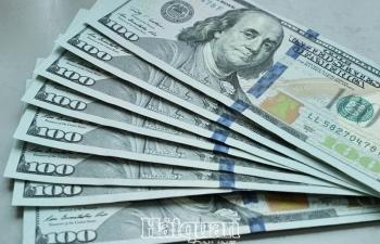 Giá vàng, USD chững lại chờ tín hiệu mới