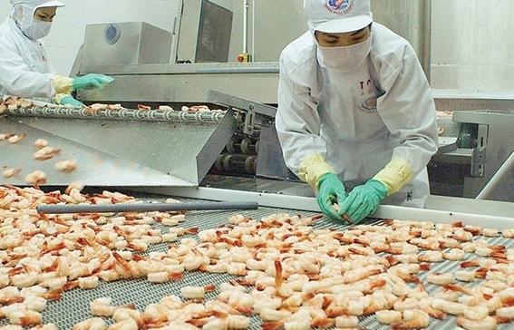 Mỹ hủy bỏ việc áp thuế chống bán phá giá đối với sản phẩm tôm của Minh Phú